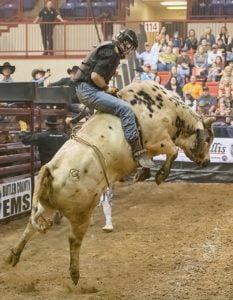 bull, bull rider, bull riding