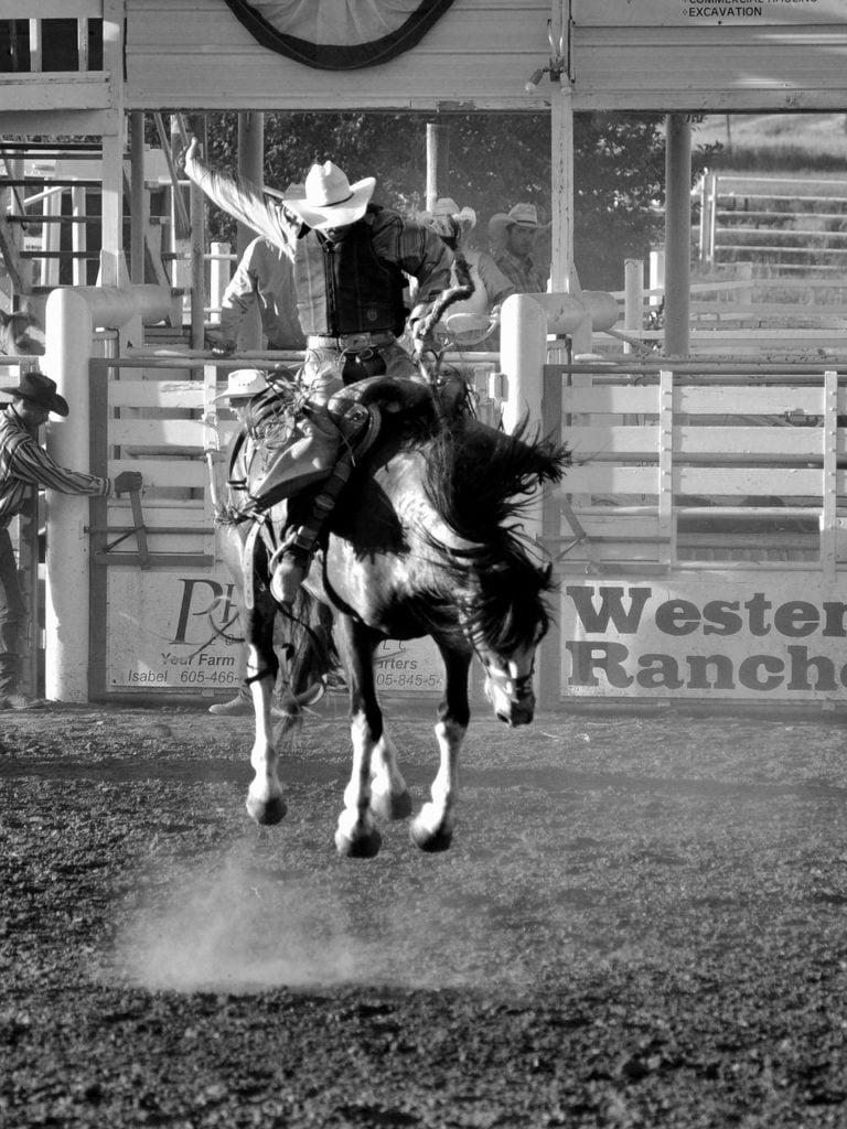 horse, rodeo, cowboy