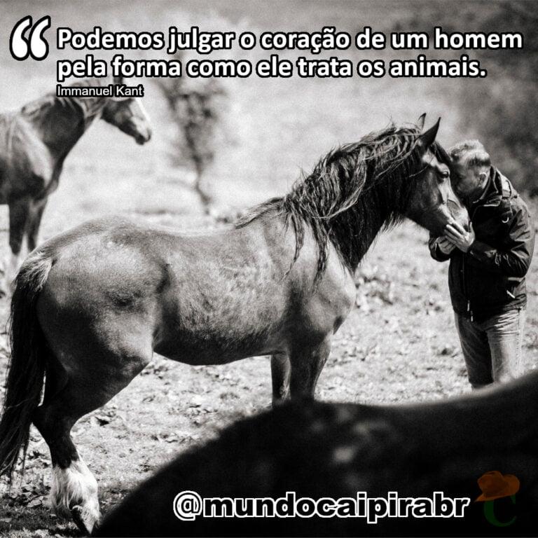 """""""Podemos julgar o coração de um homem pela forma como ele trata os animais."""" Immanuel Kant"""